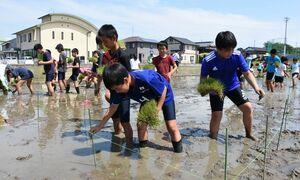 稲文字の基準となるひもに沿って稲を植える児童たち=上峰小体験田