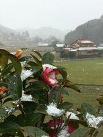 うっすらと雪が降り積もった山間部=佐賀市三瀬村