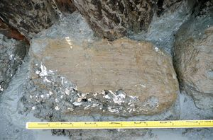 三重津海軍所跡から見つかった俵。石炭のくずと、砕いた蠣殻が詰め込まれていた=佐賀市川副町(市教育委員会提供)
