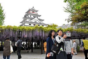 樹勢も復活し、フジと天守閣をバックに記念撮影する観光客=4月28日、唐津城