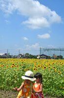 好天の下、ヒマワリ畑で遊ぶ子どもたち=30日午前、佐賀市兵庫町のひょうたん島公園西側(撮影・米倉義房)