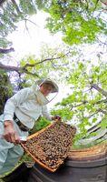 巣箱に蜜を集め、せっせと働くミツバチ=三養基郡みやき町(360度カメラ使用)