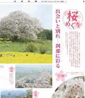 休刊日電子新聞4月号2面・桜特集の一部