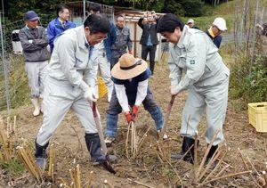 キクイモを収穫する松田一也町長(右)ら関係者=基山町小倉の棚田
