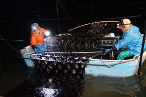 黒々としたノリを摘み取る漁業者=10日午後8時半ごろ、佐賀市川副町沖の有明海