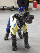 【動画】神埼の「交通安全見守り犬」シュン君に新制服