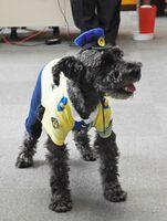 新しい制服を身にまとった交通安全見守り犬「シュン君」=神埼市の神埼署
