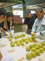 選果機にかける前に外観による選別基準を確認する選果場の職員たち=伊万里市の大川梨選果場