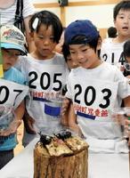 カブトムシを競い合わせる児童ら=佐賀市の南川副公民館