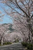 春には見事な桜並木ができる武高坂。坂を上る生徒の足取りも軽くなる?