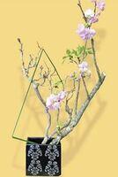山田生花店には生け花に使われる花材が多彩にある