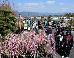 青空の下で開幕した「花とみどりの市」。庭木や花苗を品定めする人たちでにぎわった=神埼市郡の吉野ケ里歴史公園臨時駐車場