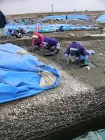 発掘作業が進められている縄文早期の貝塚群=佐賀市金立町の東名遺跡=2005年2月