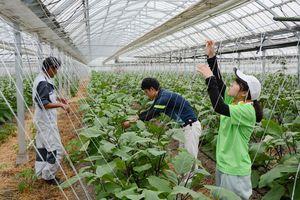 東農大生が県内でインターンシップ