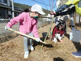桜の苗木を植樹する児童=伊万里市山代町の浦ノ崎運動広場