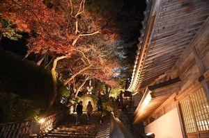 ライトアップされ大興善寺に彩りを添える木々=佐賀県三養基群基山町
