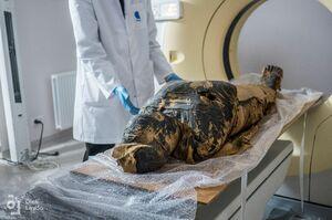 CTスキャンで調べられる古代エジプトの妊婦のミイラ=ポーランド・ワルシャワ(ロイター=共同)