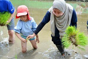 研修生と田植えする園児=佐賀市の保育園ひなた村自然塾