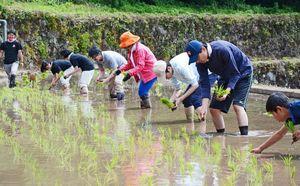 一列に並び棚田に稲の苗を手植えする参加者=有田町岳地区