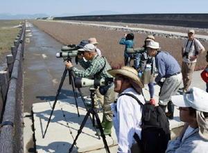 渡り鳥を観察する参加者=佐賀市東与賀町の東よか干潟