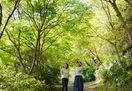 「環境芸術の森」見頃 1万本新緑のシャワー 唐津市厳木町