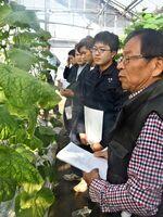 学生が育てたキュウリを観察し、生育状況について解説する特任講師の山口仁司さん(右)=佐賀市川副町の県農業大学校
