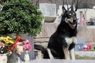 南米の「忠犬ハチ公」死ぬ
