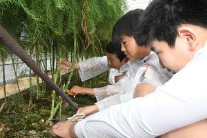 アスパラガスを収穫している児童ら=佐賀市本庄町の鬼﨑農園