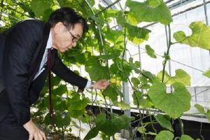 沖縄固有種のトウガンの種を生産する加温ハウスで野菜種子の国産化に向けた事業について説明する諸岡譲代表=福岡市早良区の西日本タネセンター