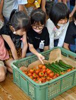 神埼清明高から贈られた野菜を見る児童たち=佐賀市の西与賀小
