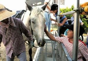 放課後等デイサービスで馬と触れ合う子どもたち=佐賀市大和町のこどもひろば