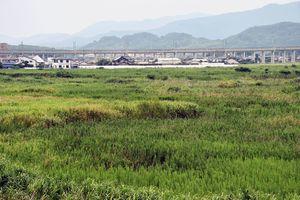 農地法違反が発覚した新産業集積エリアの計画地=鳥栖市幸津町