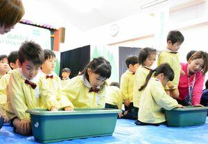 園で育てるドングリをまいた園児たち=鹿島市の七浦保育園