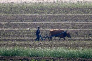 北朝鮮「食糧危機」認める