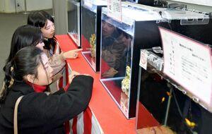 干支のネズミにちなむ水生生物が泳ぐ水槽を眺める高校生=武雄市の宇宙科学館