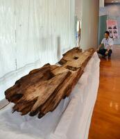 桜井茶臼山古墳で出土した大王級の人物が葬られたとみられる木棺=奈良県橿原市の橿原考古学研究所