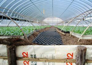 タバコ農家の苗床に利用されている松葉