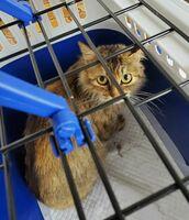 苦しそうな呼吸をしていたため保護したものの、間もなく死んだ猫。症状から何者かに蹴り上げられた可能性があるという