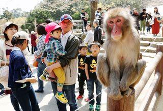 <春の行楽 レジャー特集>大分 高崎山自然動物園