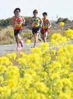 沿道沿いに咲いた菜の花を横目に競り合うランナー=7区