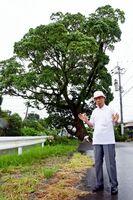 佐賀空襲で地区で唯一生き残ったクスノキについて語る福田繁文さん=佐賀市北川副町新村地区