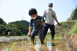 田植えを体験する園児=玄海町の浜野浦の棚田