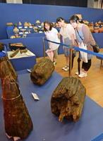 伊勢遺跡(滋賀県守山市)から出土した大型建物の柱