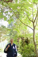 白い花を咲かせた沙羅双樹を見上げる倉永圓宰住職=小城市小城町の寶地院