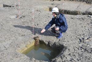 船屋地区の発掘調査で見つかったくい。規則的に並び、建物規模が判明した=佐賀市の三重津海軍所跡
