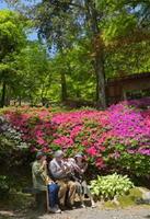 新緑を背景に鮮やかに色づいたツツジ。行楽客が佐賀県内外から訪れている=三養基郡基山町の大興善寺