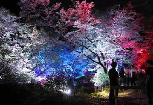 さまざまな色に変化し、園内の木々を染める=武雄市の御船山楽園