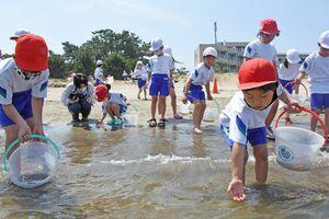 車エビの稚エビを放流する浜崎小2年の児童たち=唐津市浜玉町の浜崎海岸