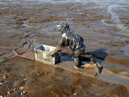 「ひゃあぼう」を使った漁から戻った漁師=1月下旬、鹿島市七浦音成海岸