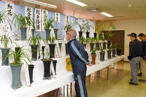 花のバランスなどを熱心に見入る来場者=武雄市文化会館